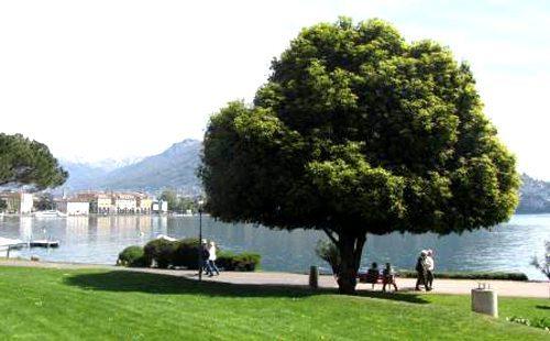 Dall'altra parte del lago di Lugano si trova il nostro residence per l'affitto di appartamenti e camere