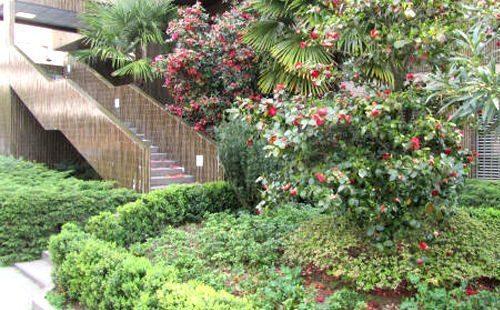 giardino degli appartamenti in affitto a lugano